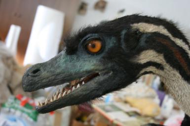 velociraptorwc
